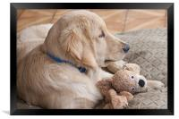 puppy with toy, Framed Print