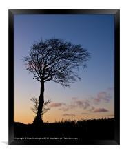 Lone tree at Sunset, Framed Print