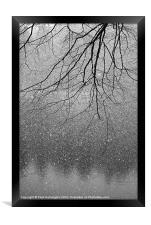 Snow and tree., Framed Print
