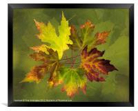 Autumn composition, Framed Print