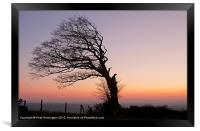 Lone half a tree!, Framed Print