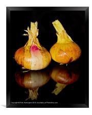 Onions, Framed Print