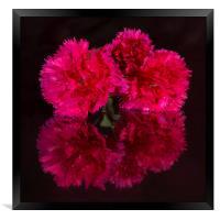 Reflected Carnations, Framed Print