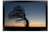 Half a tree on Raddon Top, Framed Print