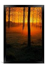 Sunrise through the Trees, Framed Print
