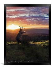 Caught In The Sunset, Framed Print