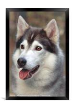 Husky, Framed Print
