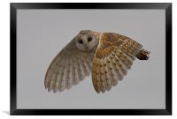 Barn Owl., Framed Print