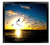 Wings on the Wind, Framed Print