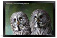 Double Take, Pair of Owls, Framed Print