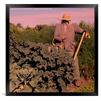Scarecrow at Sunset, Framed Print