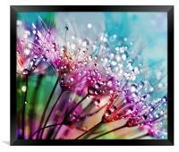 Dewdrops & Rainbows, Framed Print