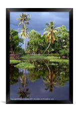 Palm Trees in a Storm Kerala, Framed Print