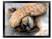 The Lion Sleeps, Framed Print