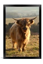 Young Highland Cow, Framed Print