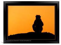 Sunset Silhouette, Framed Print