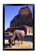 Buffalo Grazing by Bahamani Tombs at Ashtur, Framed Print