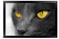 The Golden Eyes of a Cat, Framed Print