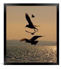 Dancing Gulls, Framed Print