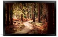 Woodland Walk, Framed Print