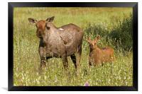 Moose, Framed Print