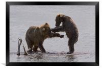 Bear dance, Framed Print