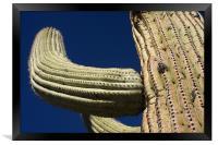 Saguaro, Framed Print