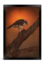 BIRD OF PREY, Framed Print