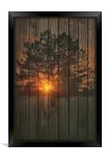 A NEW TREE, Framed Print