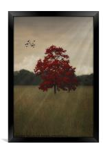 A TREE IN AUTUMN, Framed Print