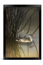 HIDING IN THE REEDS, Framed Print
