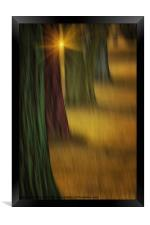 THE RAINBOW FOREST, Framed Print