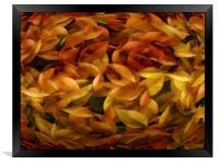 Fallen Leaves, Framed Print