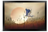 Flying Home, Framed Print