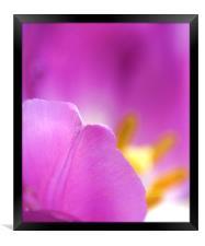 Tulip, Framed Print