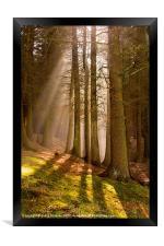 Deanclough forest, Framed Print