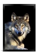 Jacob Wolf, Framed Print