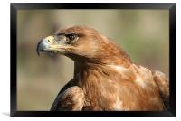 Tawny Eagle, Framed Print