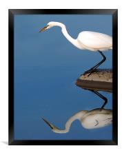 Mirrored Egret, Framed Print