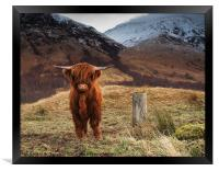 Baby Highland Cow, Framed Print