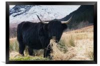 The Bull, Framed Print