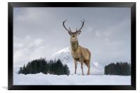 Highland Stag, Framed Print
