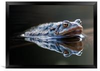 Toad, Framed Print