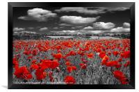 Crimson Poppies, Framed Print