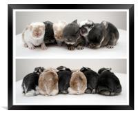Shuffling Bunnies, Framed Print