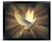 Dove of Peace., Framed Print