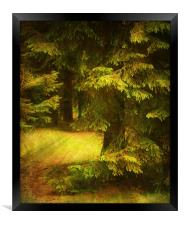 Heart of the Forest., Framed Print