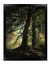 Forest Awakening., Framed Print