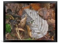 Autumnal Leaves., Framed Print