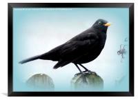 Common Blackbird, Framed Print